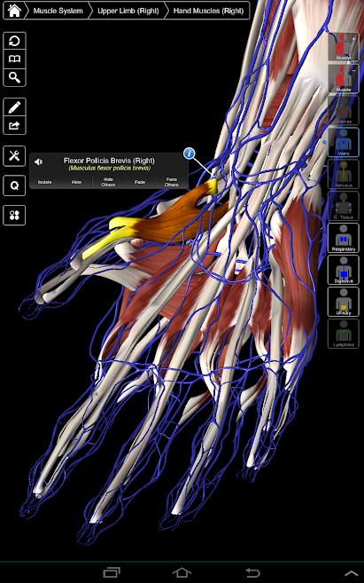 دانلود Essential Anatomy 3 1.1.3 - بهترین برنامه آناتومی بدن اندروید!