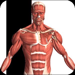 Visual Anatomy 2 Android