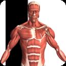 Visual Anatomy Android